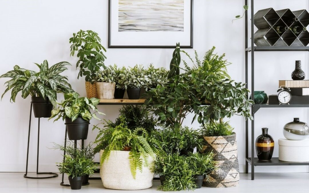 Mehr Nachhaltigkeit in den heimischen vier Wänden   Teil 2