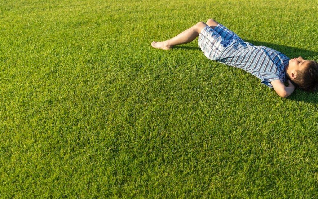 Perfekter Rasen leicht gemacht